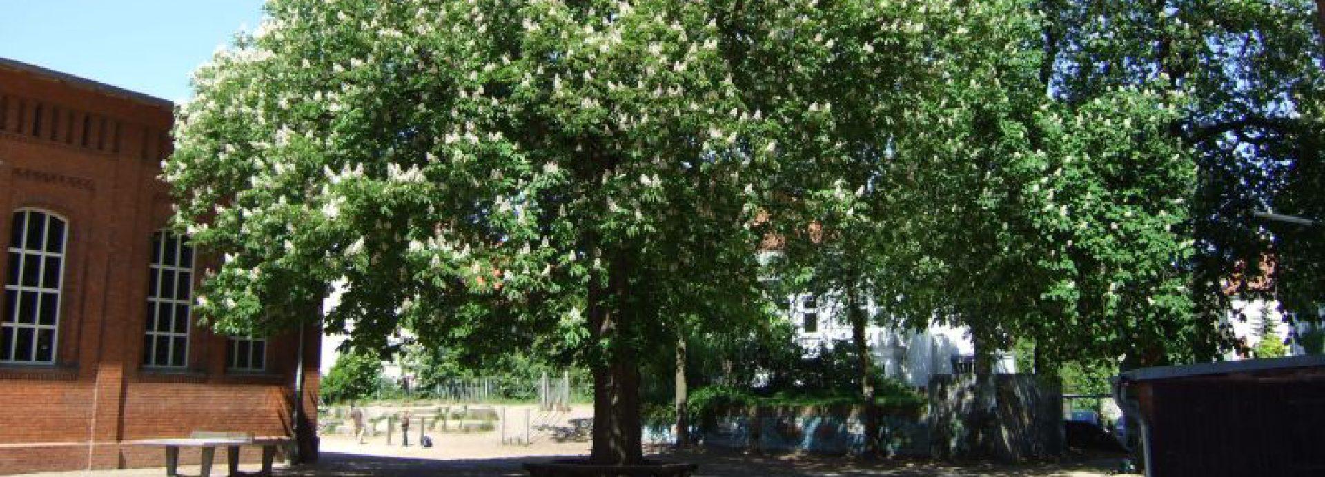 Bugenhagen Grundschule